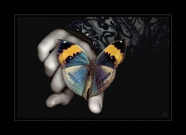 Butterfly_by_baljeet2506